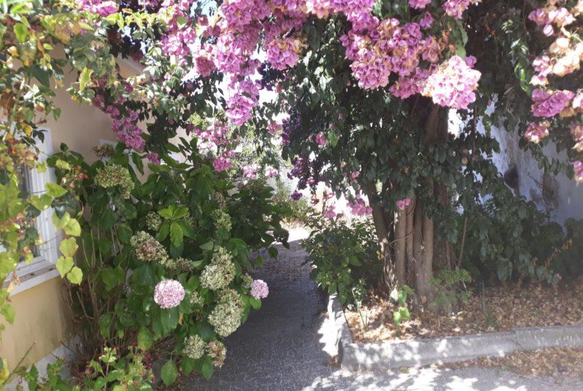 Jardim e acesso á entrada principal